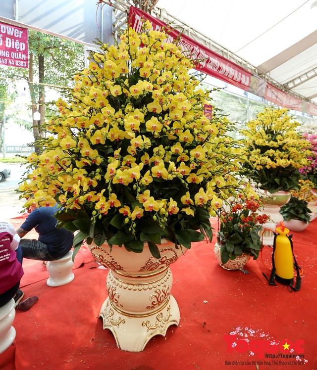 Vượt hàng vạn cây số lan hồ điệp Đà Lạt khoe sắc ở Thủ Đô, có những chậu giá hơn 100 triệu đồng - Ảnh 11.