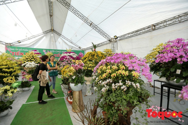Vượt hàng vạn cây số lan hồ điệp Đà Lạt khoe sắc ở Thủ Đô, có những chậu giá hơn 100 triệu đồng - Ảnh 17.