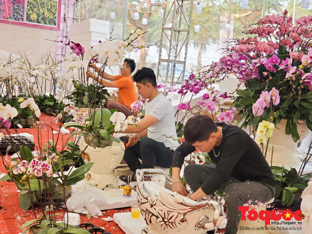 Vượt hàng vạn cây số lan hồ điệp Đà Lạt khoe sắc ở Thủ Đô, có những chậu giá hơn 100 triệu đồng - Ảnh 6.