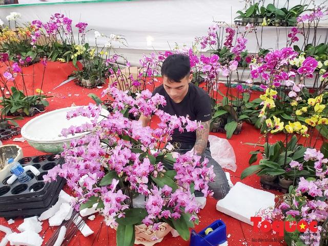Vượt hàng vạn cây số lan hồ điệp Đà Lạt khoe sắc ở Thủ Đô, có những chậu giá hơn 100 triệu đồng - Ảnh 5.