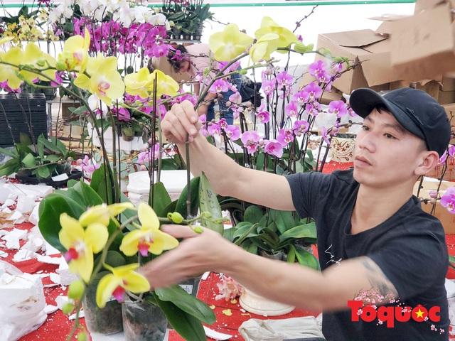 Vượt hàng vạn cây số lan hồ điệp Đà Lạt khoe sắc ở Thủ Đô, có những chậu giá hơn 100 triệu đồng - Ảnh 4.