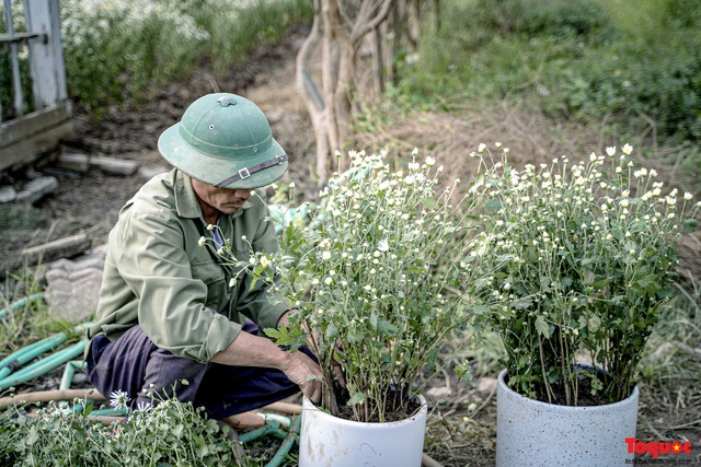 Thiếu nữ Hà nội háo hức khoe sắc bên hoa cúc họa mi đầu mùa - Ảnh 2.