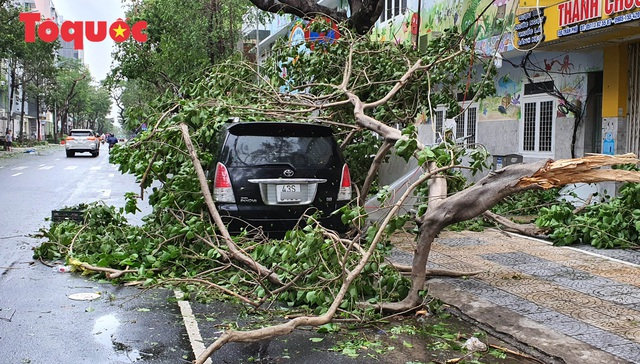 Hình ảnh Đà Nẵng sau bão số 9, nhiều cây xanh ngã đổ la liệt - Ảnh 4.