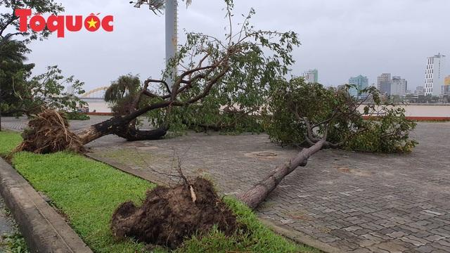 Hình ảnh Đà Nẵng sau bão số 9, nhiều cây xanh ngã đổ la liệt - Ảnh 5.