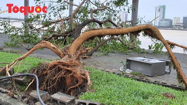 Hình ảnh Đà Nẵng sau bão số 9, nhiều cây xanh ngã đổ la liệt - Ảnh 6.