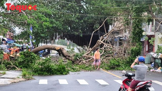 Hình ảnh Đà Nẵng sau bão số 9, nhiều cây xanh ngã đổ la liệt - Ảnh 7.