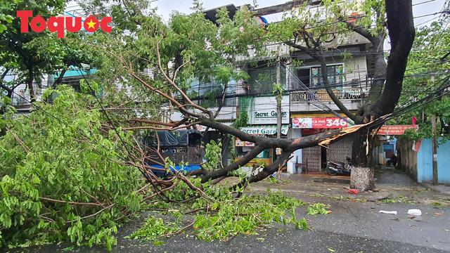 Hình ảnh Đà Nẵng sau bão số 9, nhiều cây xanh ngã đổ la liệt - Ảnh 8.
