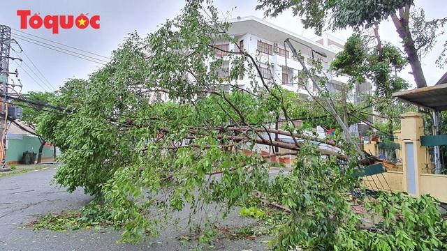 Hình ảnh Đà Nẵng sau bão số 9, nhiều cây xanh ngã đổ la liệt - Ảnh 9.