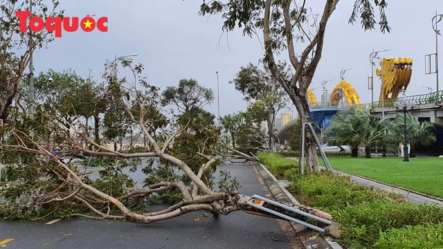 Hình ảnh Đà Nẵng sau bão số 9, nhiều cây xanh ngã đổ la liệt - Ảnh 3.