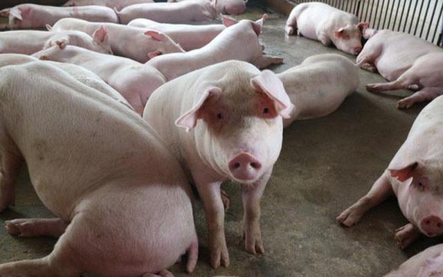 Bộ trưởng NNPTNT yêu cầu giảm giá thịt lợn hơi xuống mức 75.000 đồng/kg - Ảnh 1.
