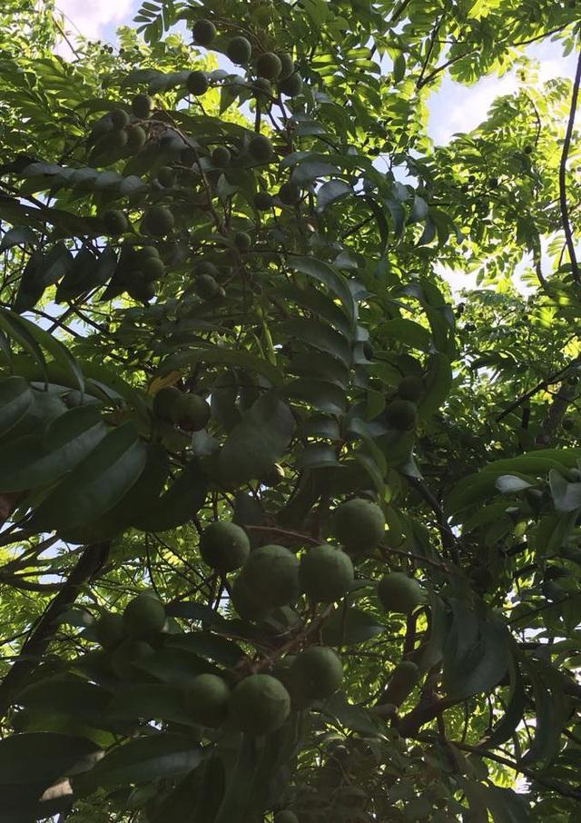 Nhà vườn 10.000m2 của nghệ sĩ Giang còi ngập hoa và trái cây - Ảnh 21.