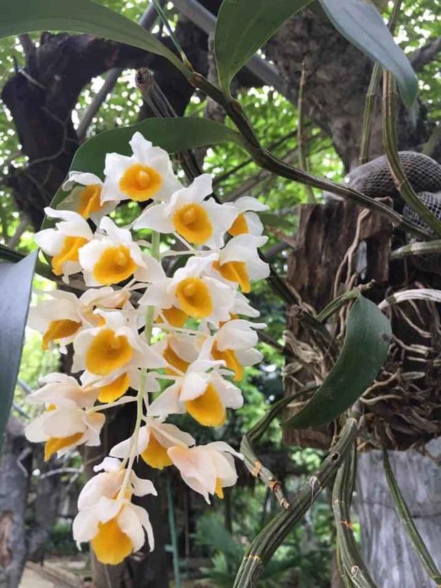 Nhà vườn 10.000m2 của nghệ sĩ Giang còi ngập hoa và trái cây - Ảnh 18.