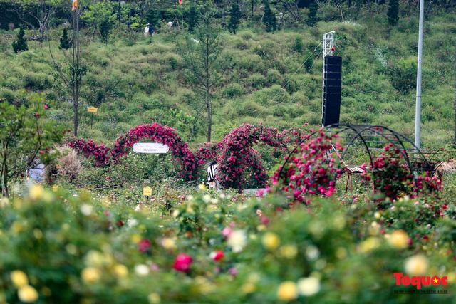 Ngắm thung lũng hoa hồng tuyệt đẹp nhận kỷ lục lớn nhất Việt Nam - Ảnh 3.