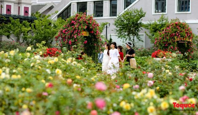 Ngắm thung lũng hoa hồng tuyệt đẹp nhận kỷ lục lớn nhất Việt Nam - Ảnh 19.