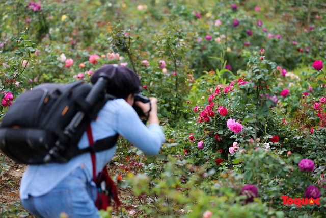 Ngắm thung lũng hoa hồng tuyệt đẹp nhận kỷ lục lớn nhất Việt Nam - Ảnh 21.