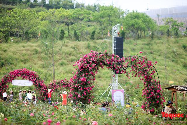 Ngắm thung lũng hoa hồng tuyệt đẹp nhận kỷ lục lớn nhất Việt Nam - Ảnh 1.