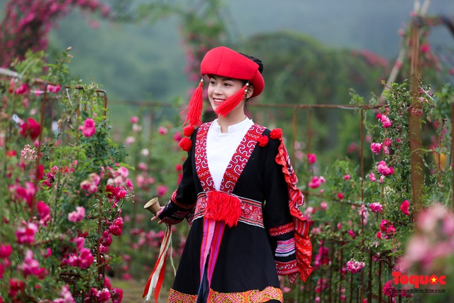Ngắm thung lũng hoa hồng tuyệt đẹp nhận kỷ lục lớn nhất Việt Nam - Ảnh 15.