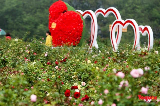 Ngắm thung lũng hoa hồng tuyệt đẹp nhận kỷ lục lớn nhất Việt Nam - Ảnh 13.