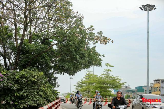 """Ngỡ ngàng những cây bông gòn cuối cùng ở Hà Nội nở """"hoa tuyết"""" - Ảnh 9."""