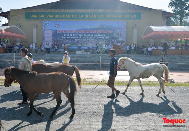"""Độc đáo giải đua ngựa thồ và những kị sĩ """"chân đất"""" ở Bắc Hà - Ảnh 4."""