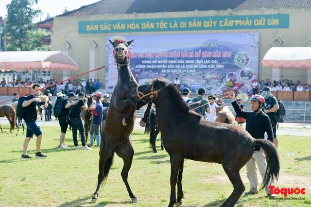 """Độc đáo giải đua ngựa thồ và những kị sĩ """"chân đất"""" ở Bắc Hà - Ảnh 7."""