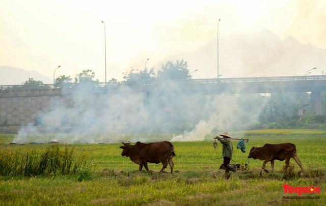 Nông dân lại đốt rơm rạ, khói bụi đang bủa vây ngoại thành Hà Nội - Ảnh 14.