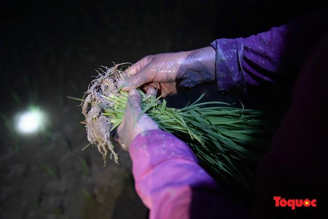 Hà Nội: Nắng nóng hơn 40 độ C, người nông dân soi đèn cấy lúa từ 3h sáng - Ảnh 4.