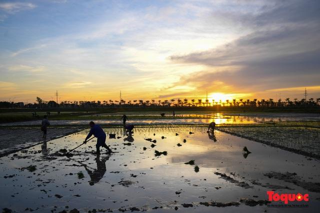 Hà Nội: Nắng nóng hơn 40 độ C, người nông dân soi đèn cấy lúa từ 3h sáng - Ảnh 11.