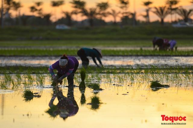 Hà Nội: Nắng nóng hơn 40 độ C, người nông dân soi đèn cấy lúa từ 3h sáng - Ảnh 12.