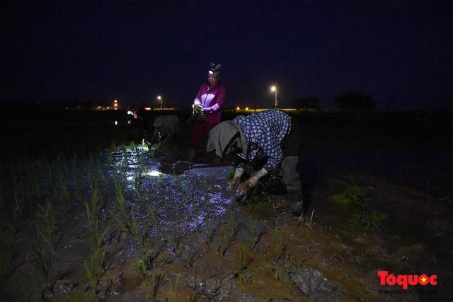 Hà Nội: Nắng nóng hơn 40 độ C, người nông dân soi đèn cấy lúa từ 3h sáng - Ảnh 2.