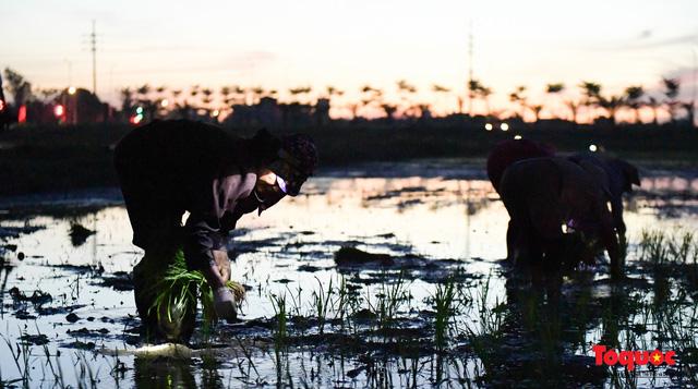 Hà Nội: Nắng nóng hơn 40 độ C, người nông dân soi đèn cấy lúa từ 3h sáng - Ảnh 10.
