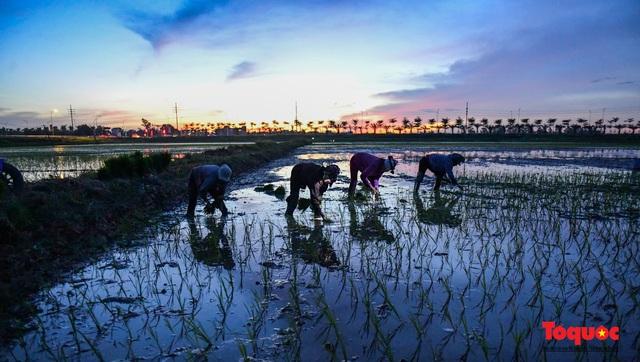 Hà Nội: Nắng nóng hơn 40 độ C, người nông dân soi đèn cấy lúa từ 3h sáng - Ảnh 1.