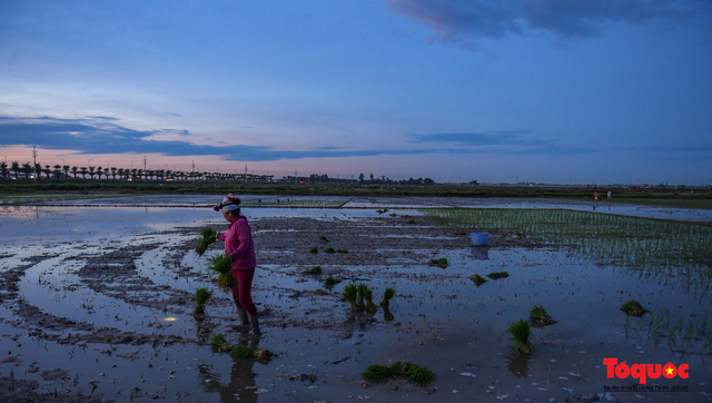 Hà Nội: Nắng nóng hơn 40 độ C, người nông dân soi đèn cấy lúa từ 3h sáng - Ảnh 9.