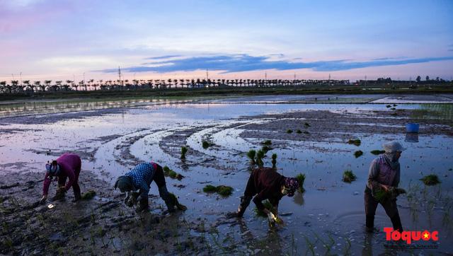 Hà Nội: Nắng nóng hơn 40 độ C, người nông dân soi đèn cấy lúa từ 3h sáng - Ảnh 6.