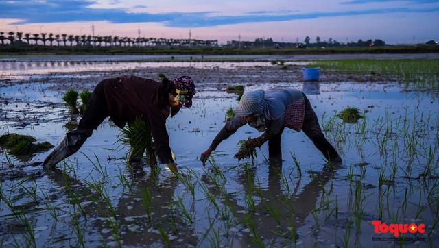 Hà Nội: Nắng nóng hơn 40 độ C, người nông dân soi đèn cấy lúa từ 3h sáng - Ảnh 7.