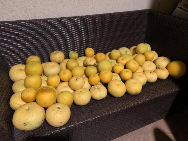 """Bằng Kiều khoe trái cây thu hoạch toàn quả """"khủng"""" - Ảnh 8."""