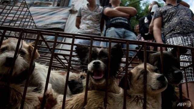 Điểm nóng du lịch của Campuchia chính thức cấm buôn bán thịt chó - Ảnh 1.