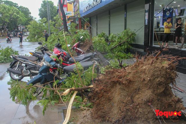 Gió to, mưa lớn, nhiều cây xanh tại TP Huế ngã đổ do bão số 5 - Ảnh 9.