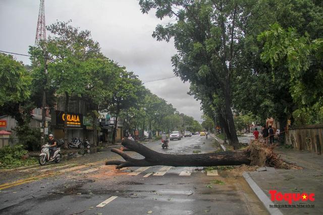 Gió to, mưa lớn, nhiều cây xanh tại TP Huế ngã đổ do bão số 5 - Ảnh 8.