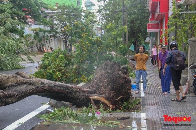 Gió to, mưa lớn, nhiều cây xanh tại TP Huế ngã đổ do bão số 5 - Ảnh 4.