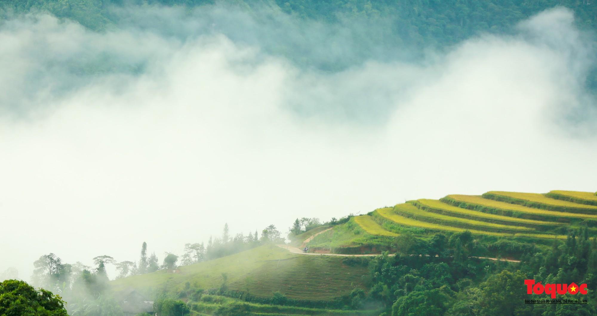 Chiêm ngưỡng vẻ đẹp ngỡ ngàng mùa lúa chín vàng của Hoàng Su Phì  - Ảnh 14.