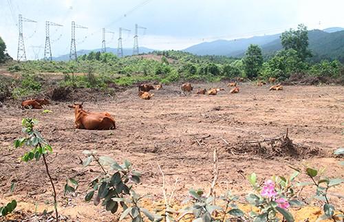 """Ông Trần Bắc Hà đã ủng hộ """"siêu dự án"""" nuôi bò tại Hà Tĩnh 4.500 tỷ thế nào? - Ảnh 1."""