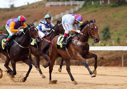 Bổ sung Dự án tổ hợp vui chơi giải trí đa năng - Trường đua ngựa vào Quy hoạch TP Hà Nội - Ảnh 1.