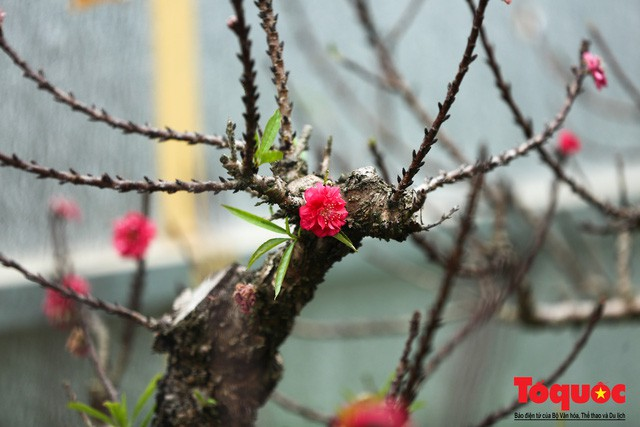 Đậm đà hương vị tết cổ truyền đón năm mới khắp châu Á - Ảnh 1.