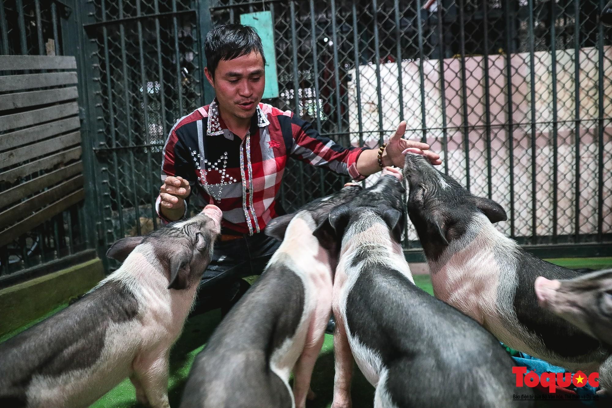 Năm Kỷ Hợi: Cùng khám phá nơi huấn luyện xiếc lợn đầu tiên của Việt Nam - Ảnh 5.