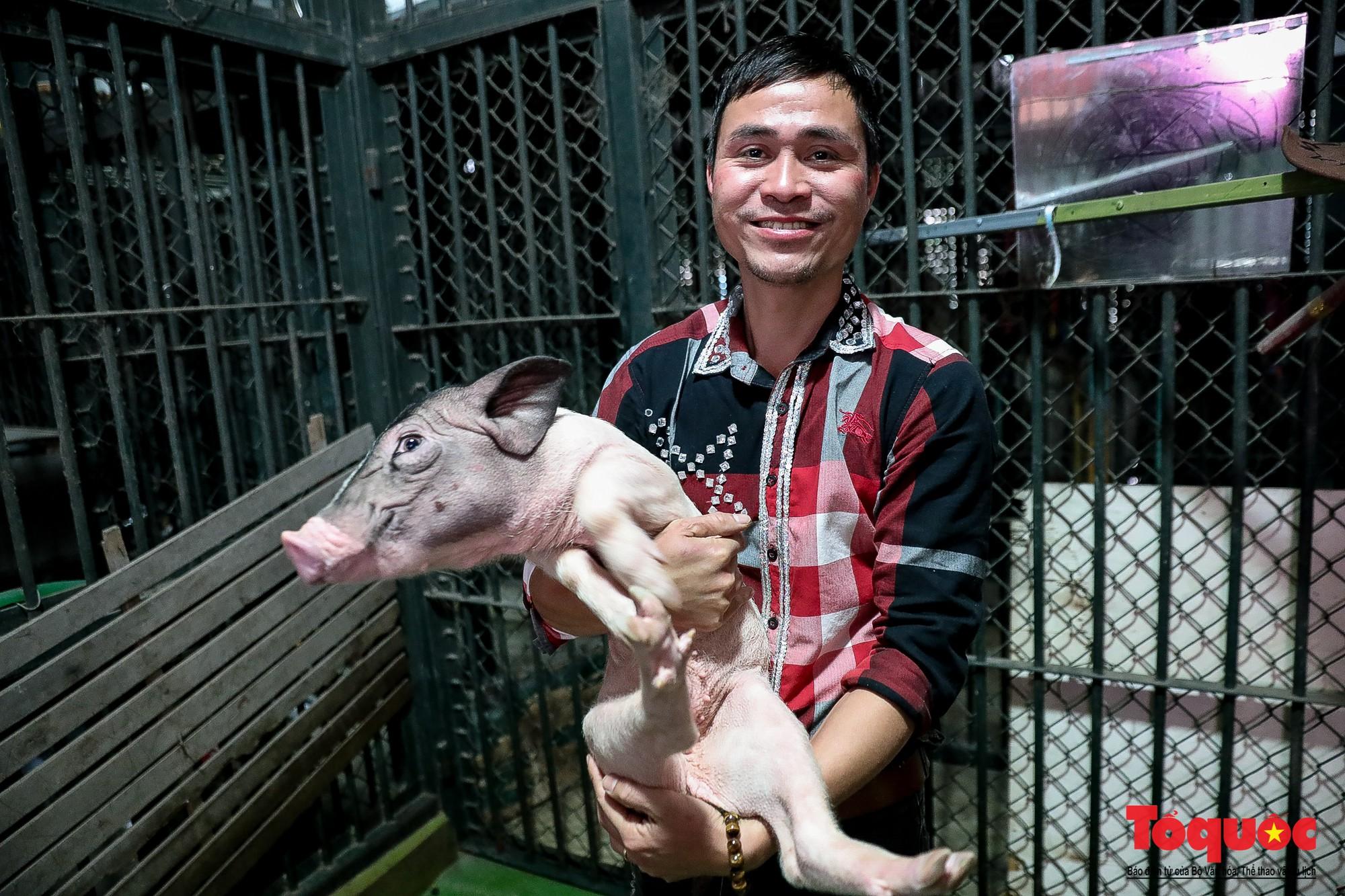 Năm Kỷ Hợi: Cùng khám phá nơi huấn luyện xiếc lợn đầu tiên của Việt Nam - Ảnh 18.