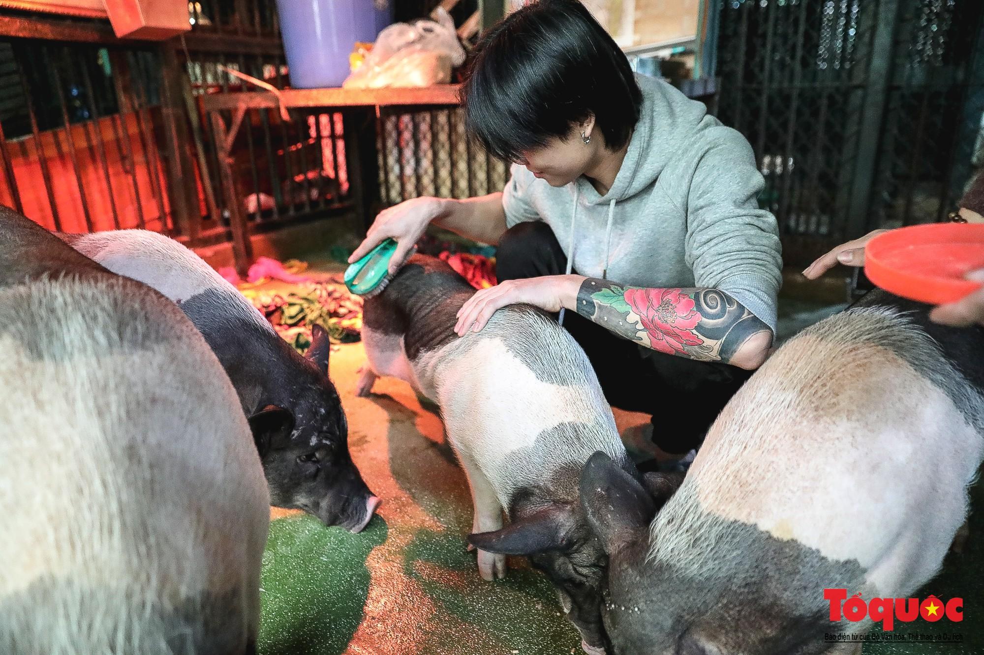 Năm Kỷ Hợi: Cùng khám phá nơi huấn luyện xiếc lợn đầu tiên của Việt Nam - Ảnh 11.