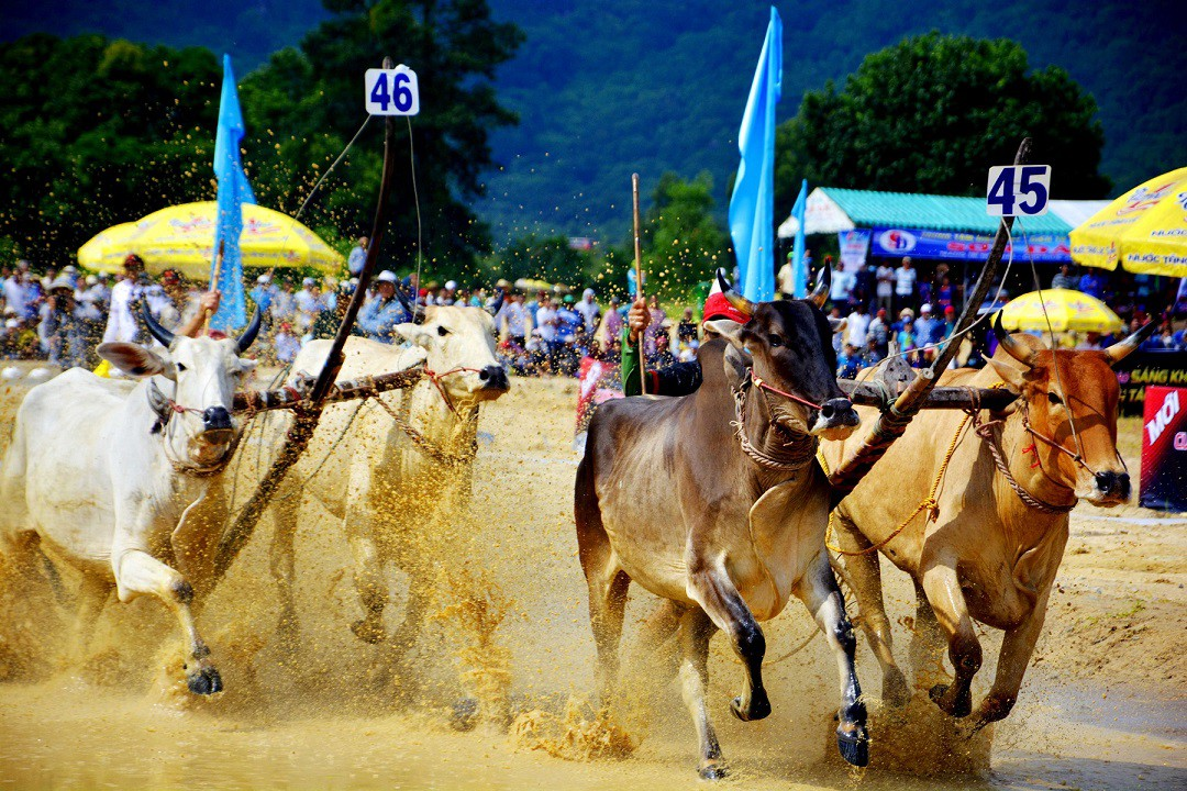 Tưng bừng Lễ hội đua bò Bảy Núi cùng Number 1 Cola - Ảnh 3.