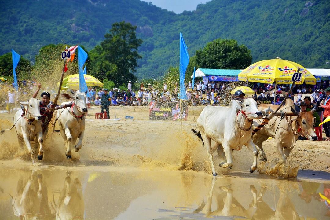 Tưng bừng Lễ hội đua bò Bảy Núi cùng Number 1 Cola - Ảnh 4.