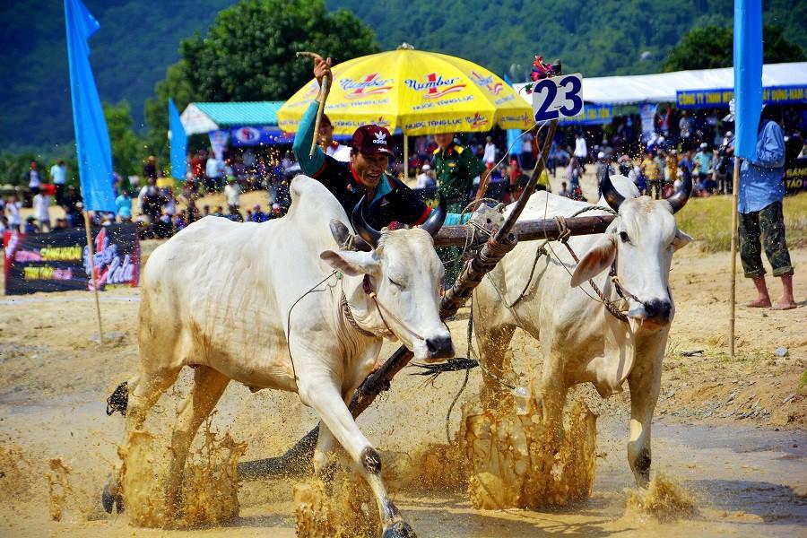 Tưng bừng Lễ hội đua bò Bảy Núi cùng Number 1 Cola - Ảnh 5.